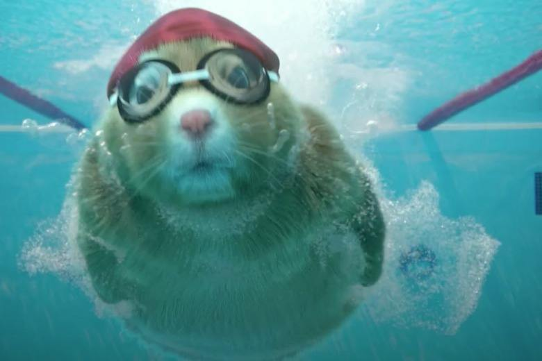 Kia Hamster Commercial >> Swimming Makes It Into Soul Hamster Cross Trainning Commercial - Video