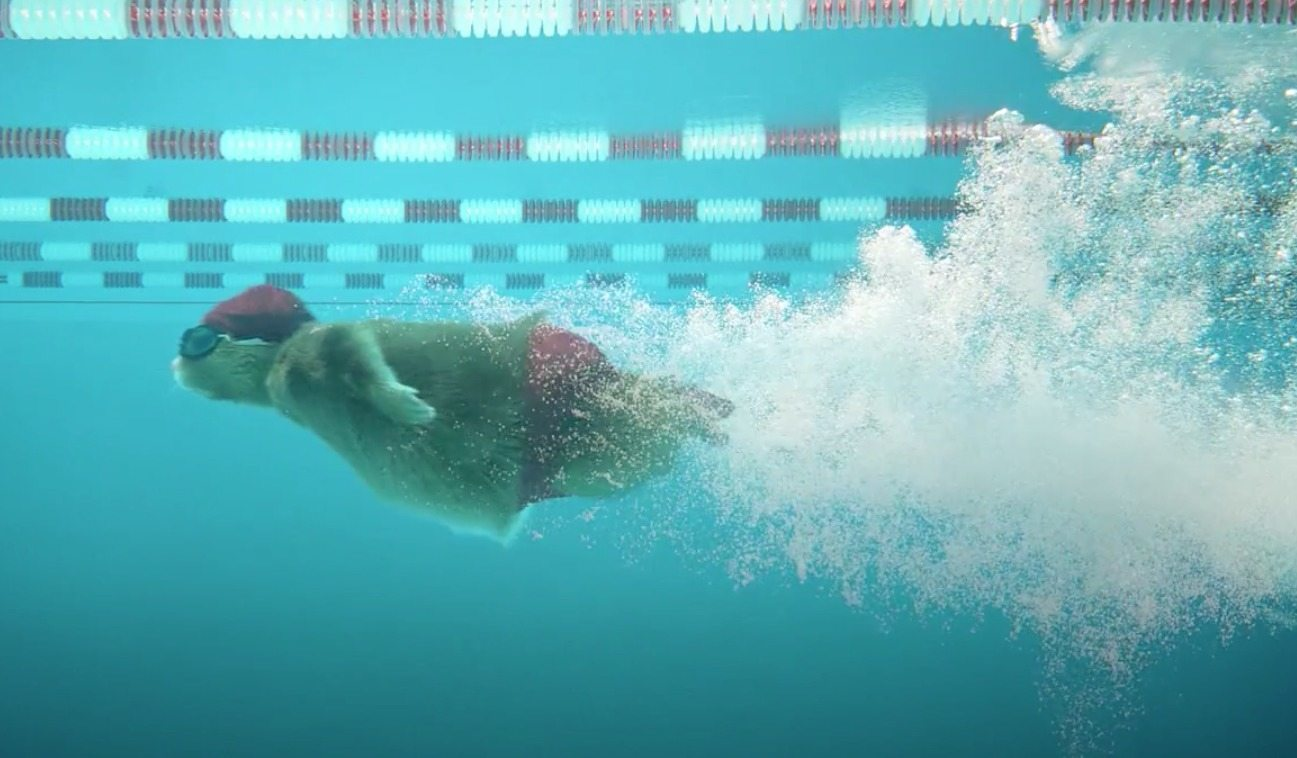 Kia Soul Commercial >> Swimming Makes It Into Soul Hamster Cross Trainning Commercial - Video