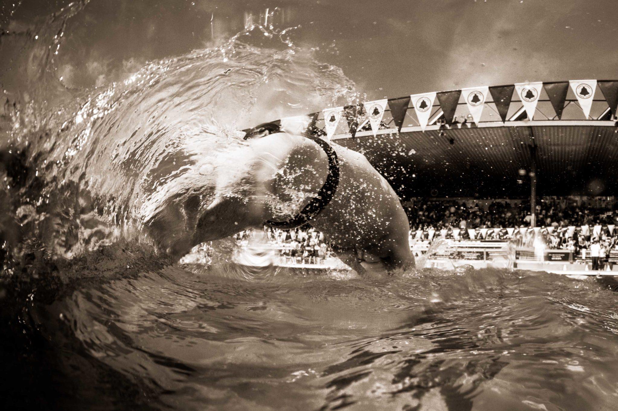 Swim Job: Redlands Swim Team seeks Full-Time Head Coach