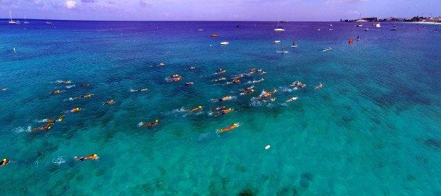 Swim Barbados