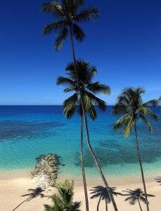 swim barbados vacations