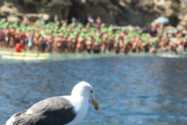 La Jolla Rough Water Swim - open water swimming - by Mike Lewis-8