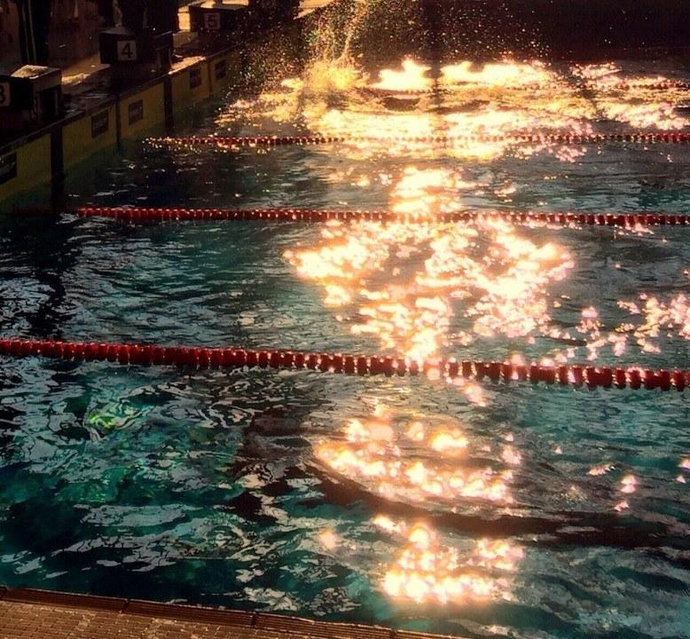 """Mainzer Schwimmverein 1901 e.V. erhält """"Stern des Sports"""" in Gold"""