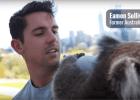 Eamon Sullivan Hugs Koalas