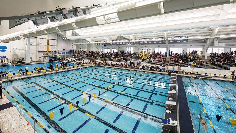 Michigan Swimming Swim Jobs Love Swimswam