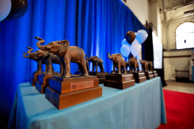 Tuft's 1st NCAA Swimming Champ, Lilley, Tabbed for School Hall of Fame