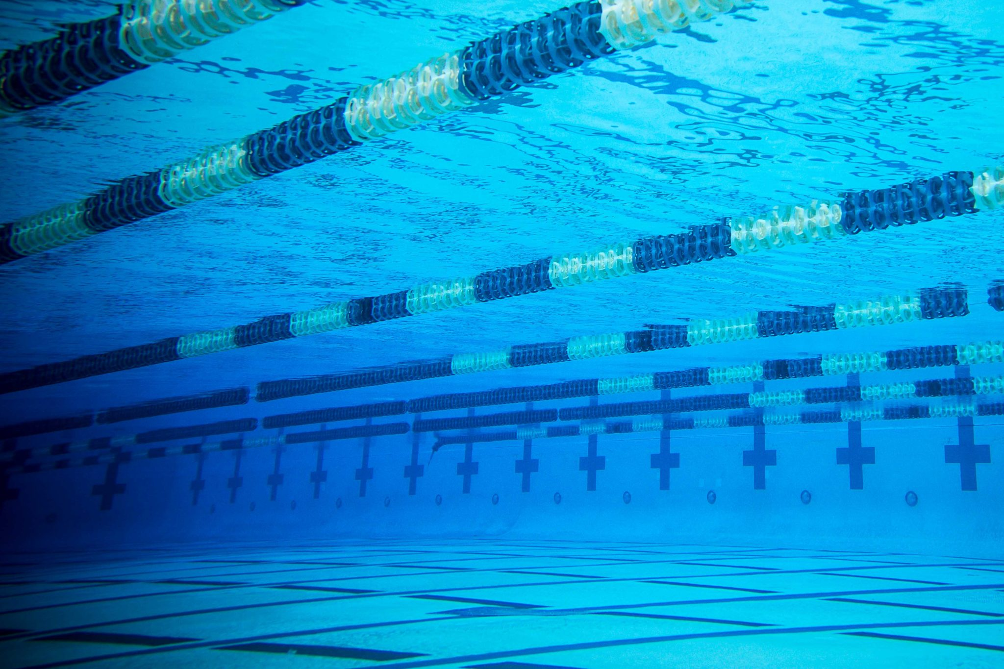 From The Lane Lines: An Ode to a Swimmer's Best Friend