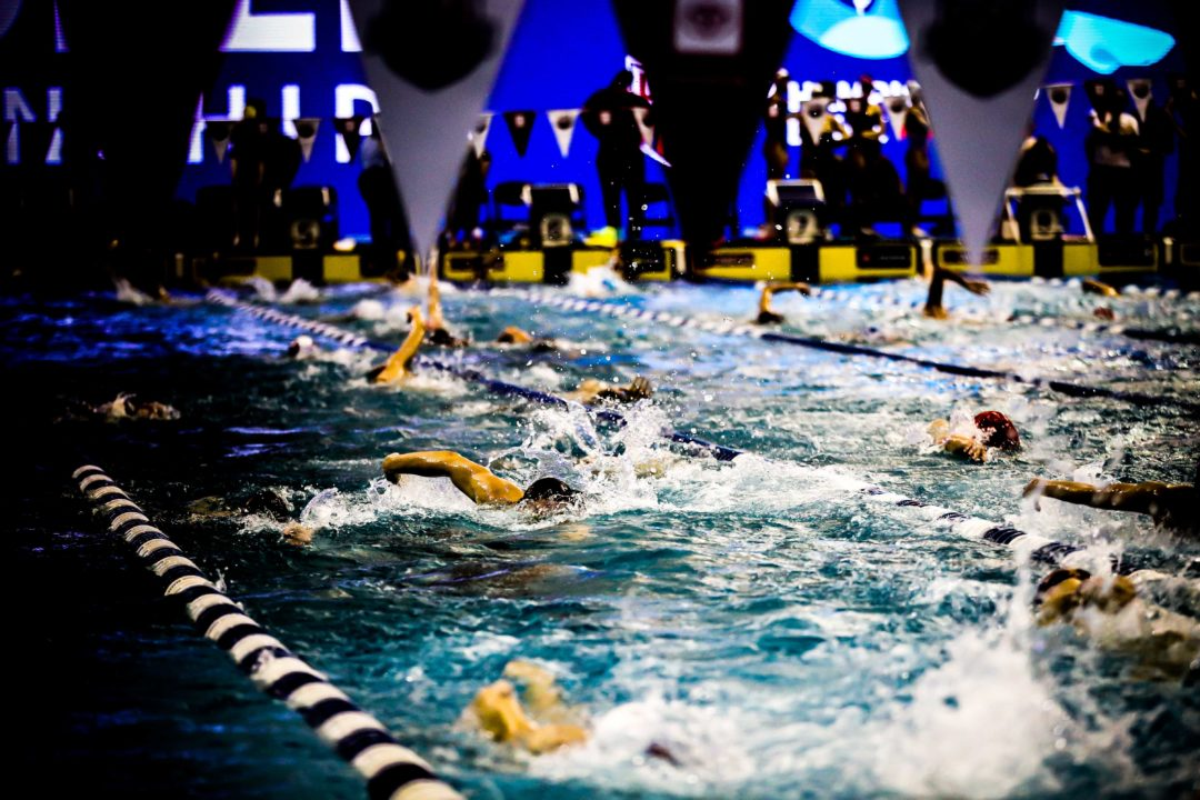 SwimSwam's Official 2019 Swammy Awards Index