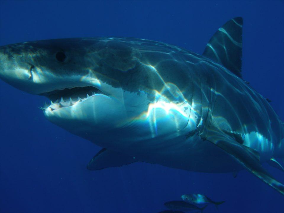 Spanish Para Swimmer Ariel Schrenck Stalked By Sharks While Training (Video)