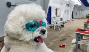 NOVA Of Virginia's Dogs Share Quarantine Pool Training