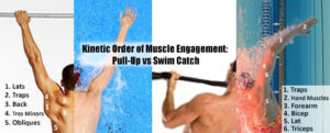 Can Dryland Build Swim Catch Muscles Effectively?