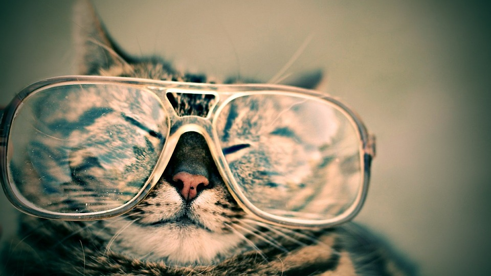 Beyond The Lane Lines: Hide Your Goggles From The Kitty Thief