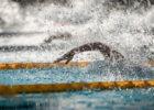 free freestyle stock pool